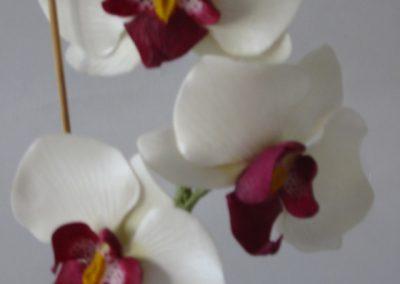 pot Orchid 2.jpg